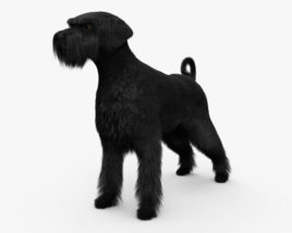 3D model of Schnauzer HD