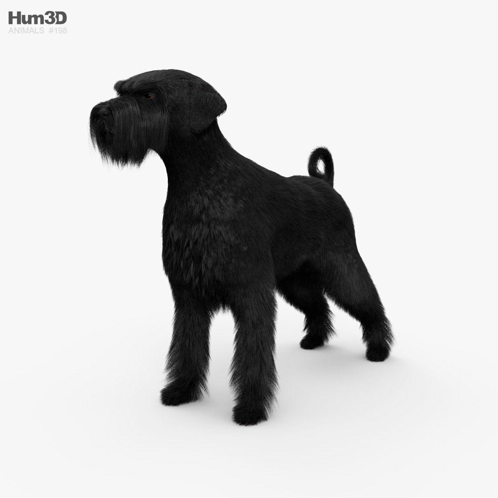 Schnauzer HD 3D model