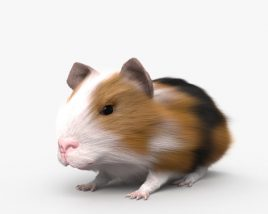 Guinea Pig HD 3D model