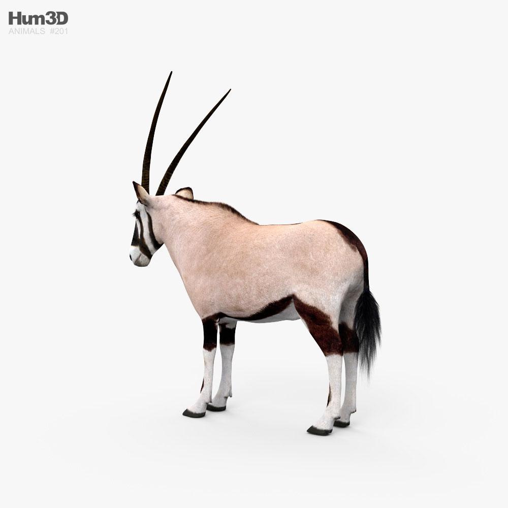 Oryx HD 3d model