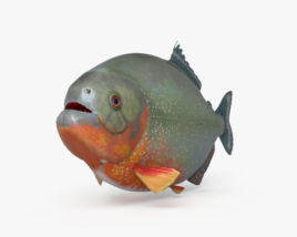 Piranha HD 3D model