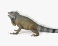 Iguana HD 3d model