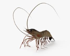 Shrimp HD 3D model