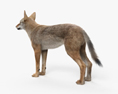 Coyote HD 3d model