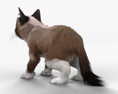 Grumpy Cat HD 3d model