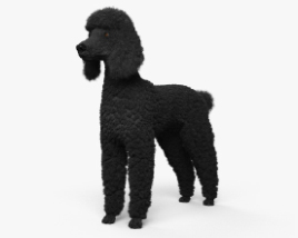 Poodle HD 3D model
