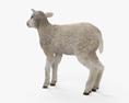 Lamb HD 3d model