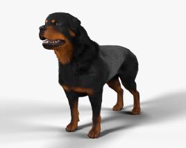 Rottweiler HD 3D model