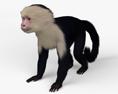 Capuchin HD 3d model