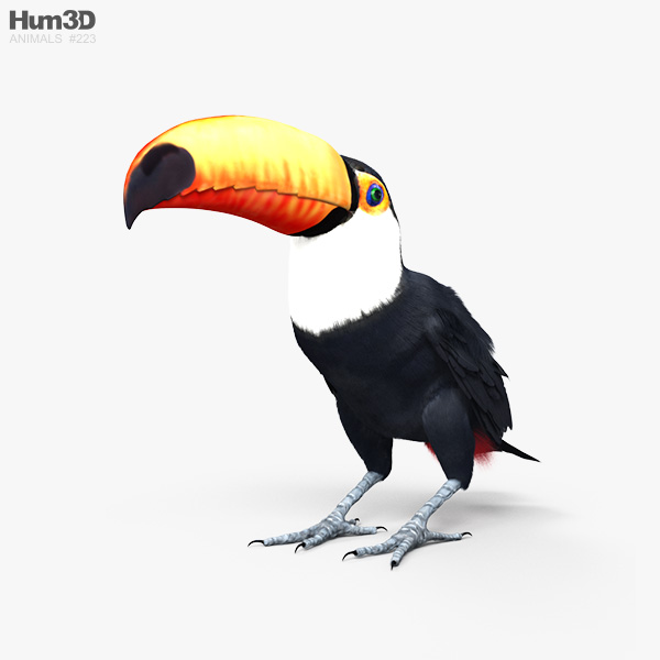 Toco Toucan HD 3D model