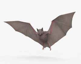 3D model of Common Bat HD