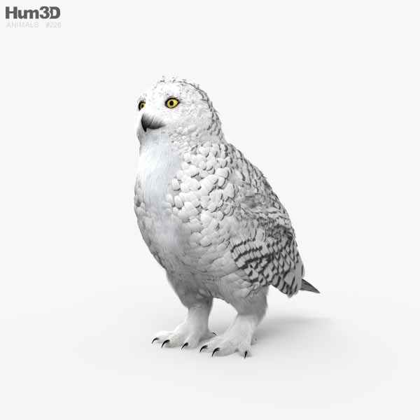 Snowy Owl HD 3D model