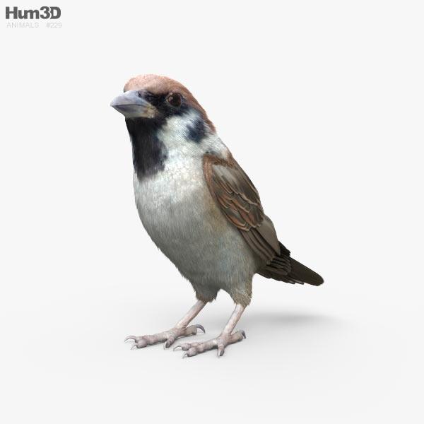 Sparrow HD 3D model