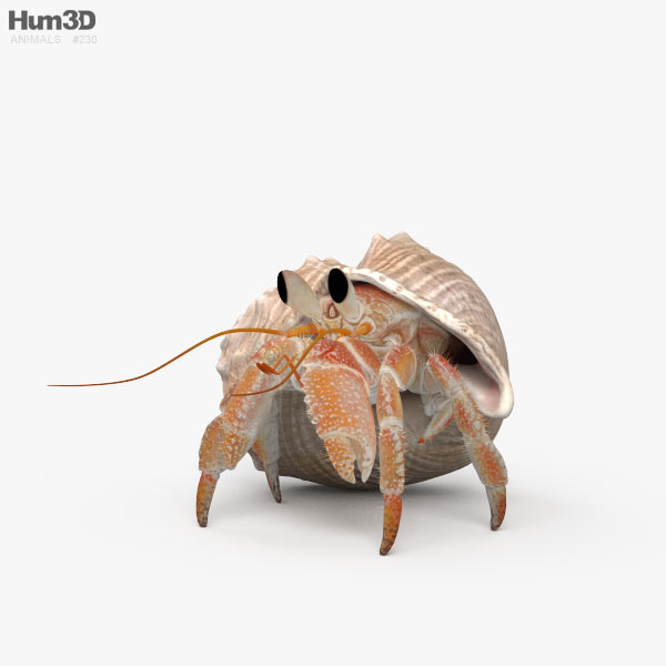 Hermit Crab HD 3D model