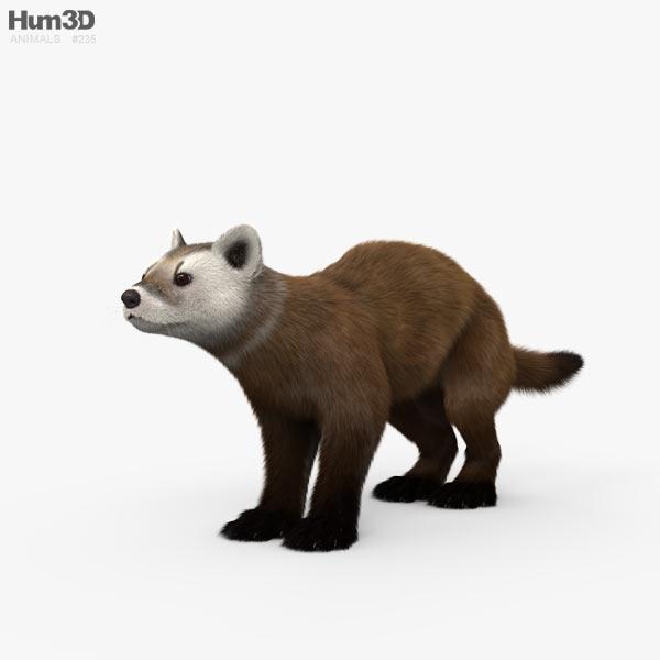American Marten HD 3D model