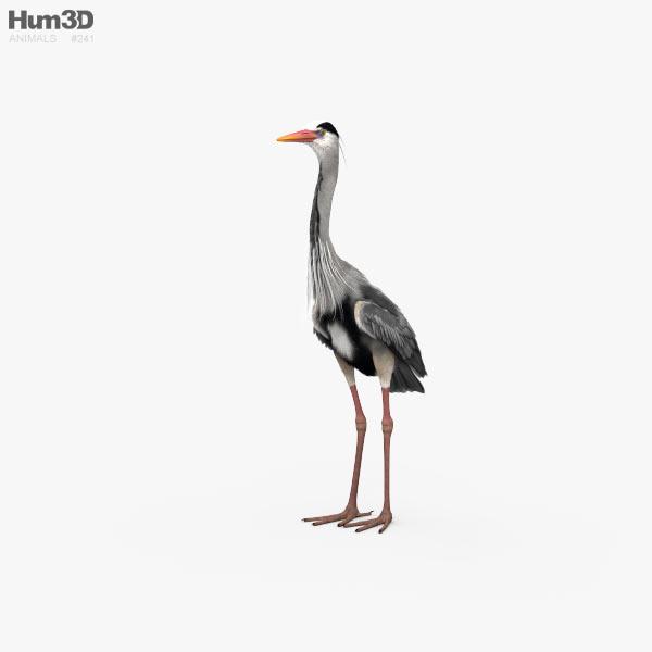 Heron HD 3D model