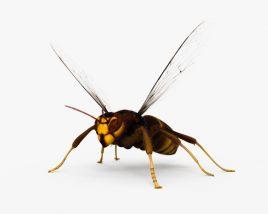 Asian Hornet HD 3D model