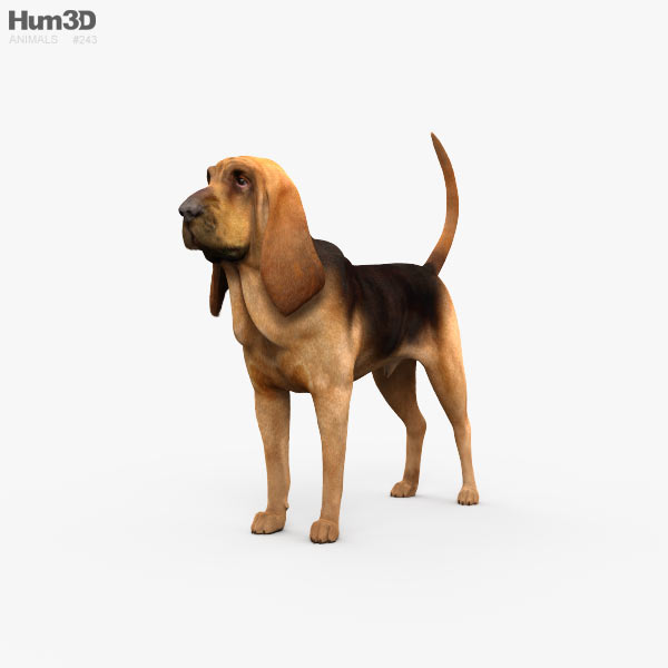 Bloodhound HD 3D model