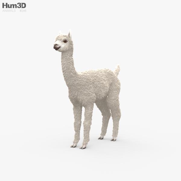 Alpaca HD 3D model