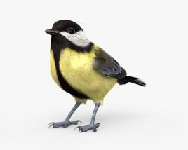 3D model of Great Tit HD