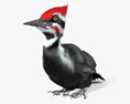 Woodpecker HD 3d model