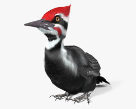 3D model of Woodpecker HD