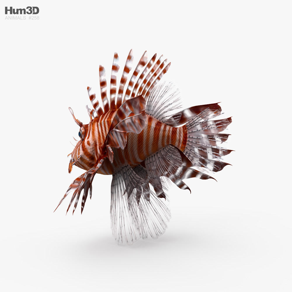Lionfish HD 3d model