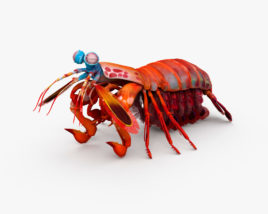 3D model of Mantis Shrimp HD