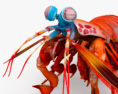 Mantis Shrimp HD 3d model