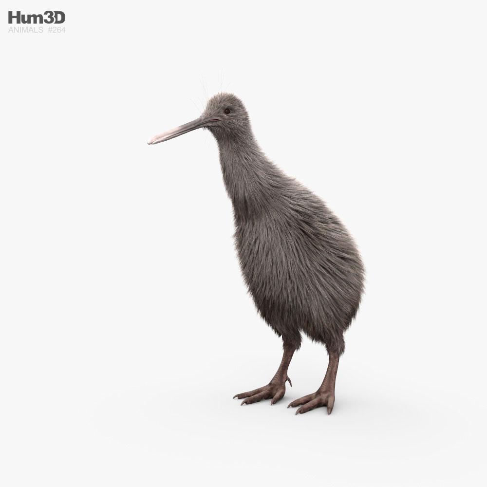Kiwi HD 3D model
