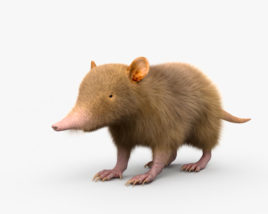 3D model of Hispaniolan Solenodon HD