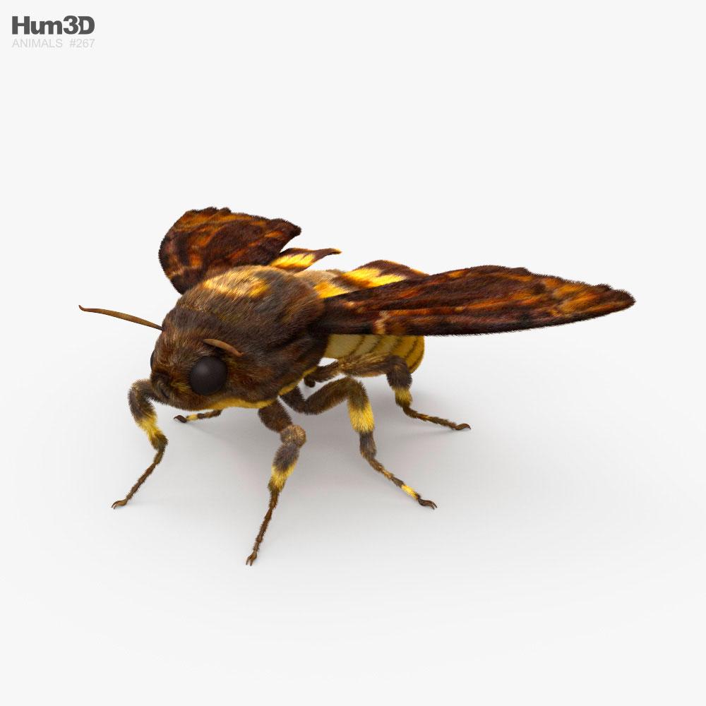 Death's-Head Hawkmoth HD 3D model