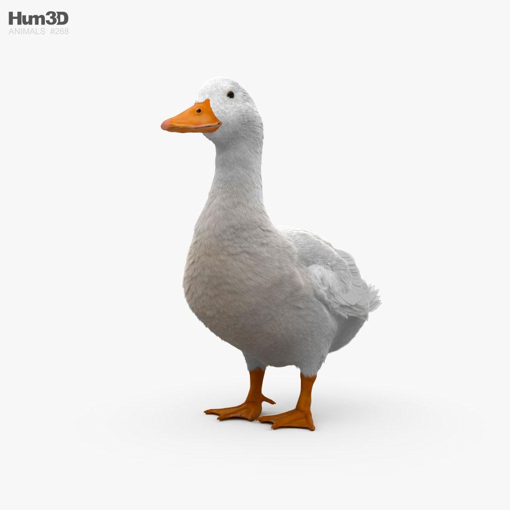 3D model of Pekin Duck HD