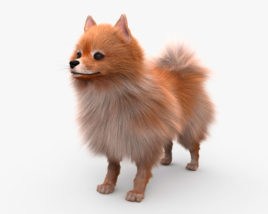 3D model of Pomeranian HD