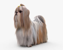 3D model of Shih Tzu HD