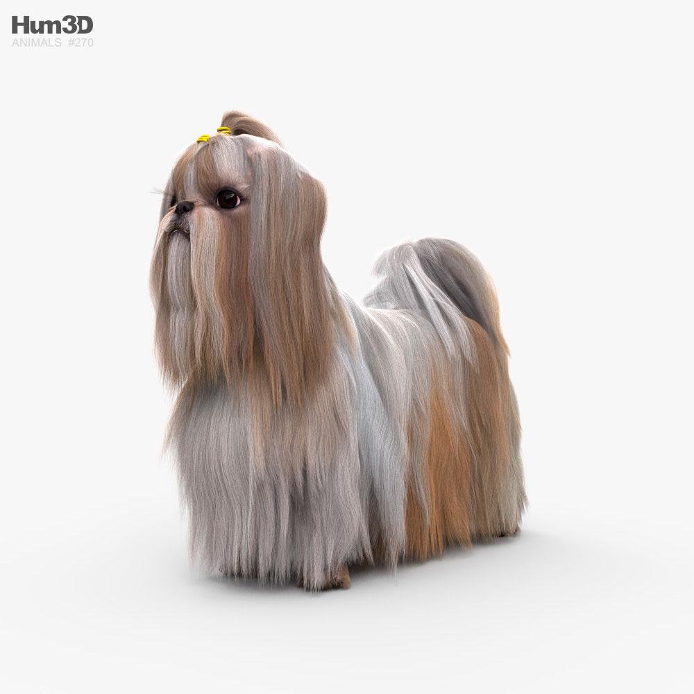 3D model of Shih Tzu HD