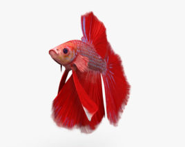 3D model of Betta Fish HD
