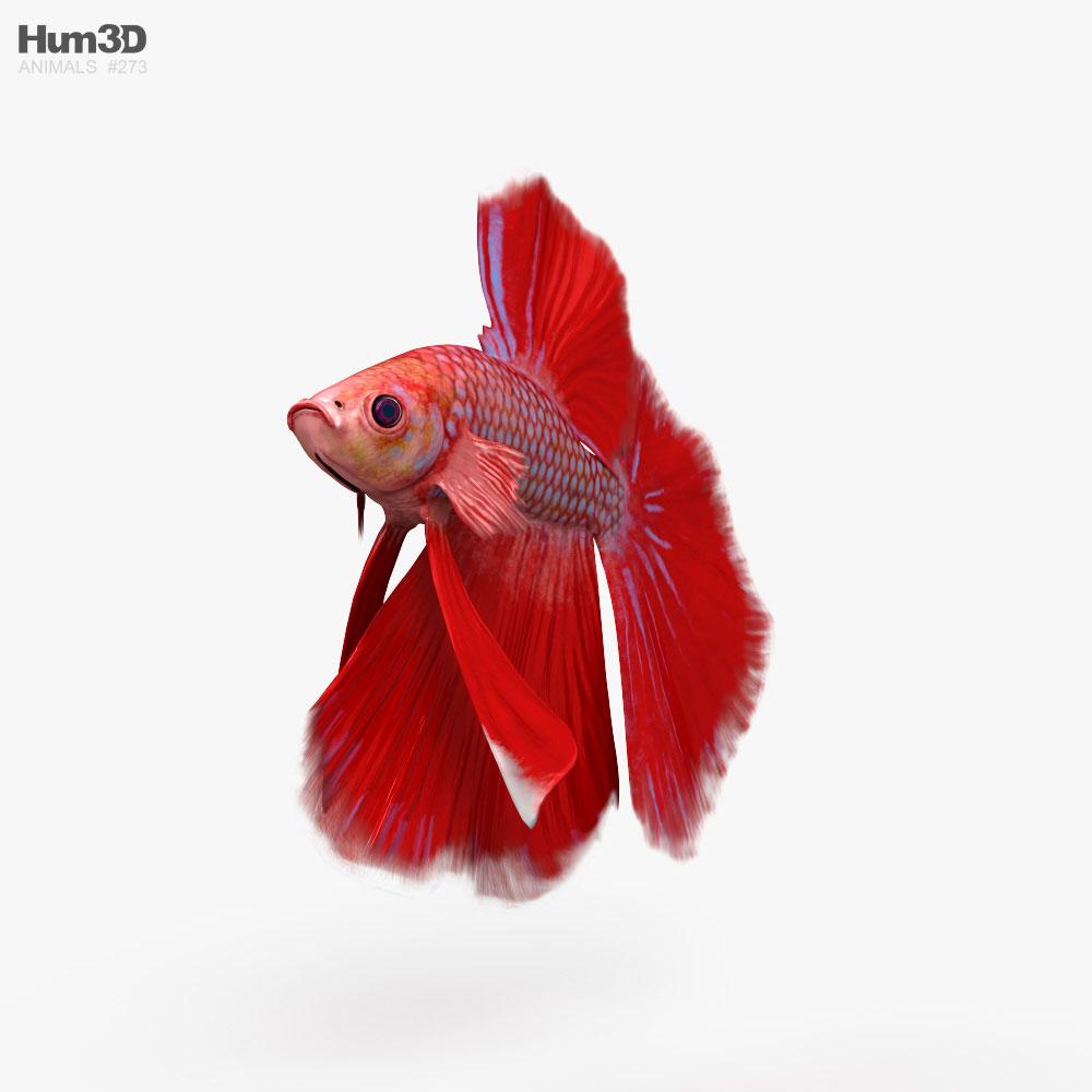 3D model of Betta Fish HD
