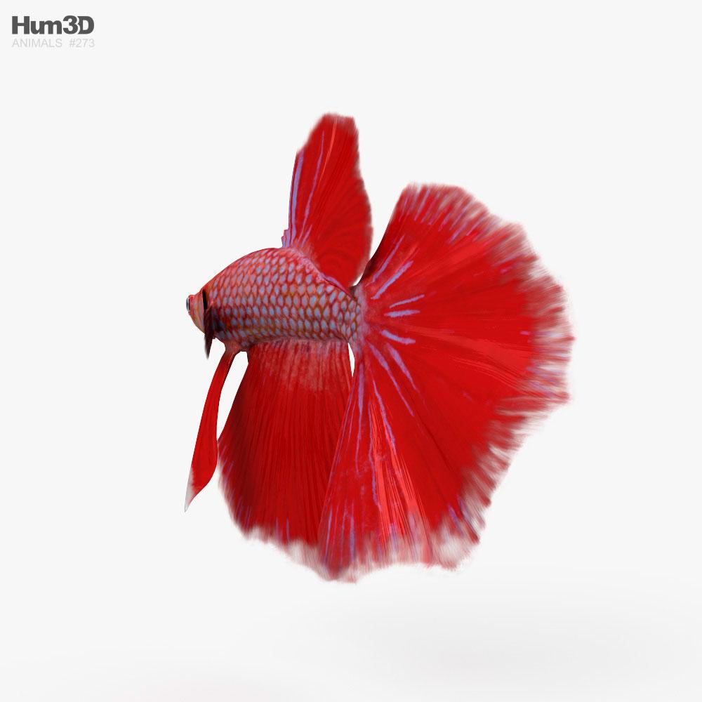 Betta Fish HD 3d model