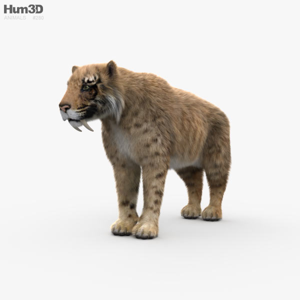 Saber-Toothed Tiger HD 3D model