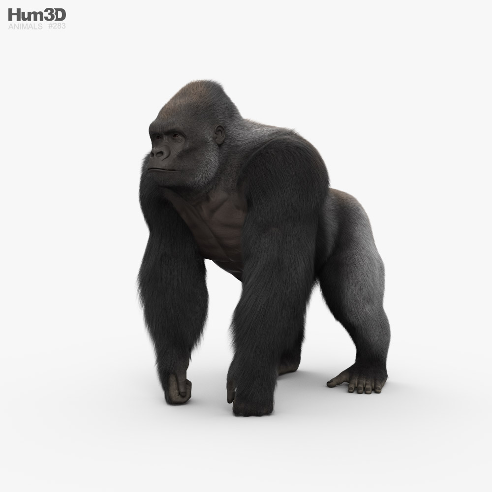 Gorilla HD 3D model