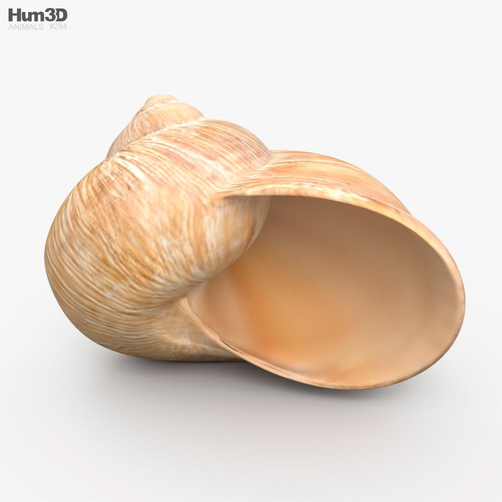 3D model of Snail Shell