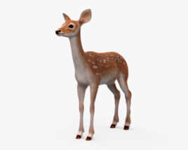 3D model of Deer Fawn HD