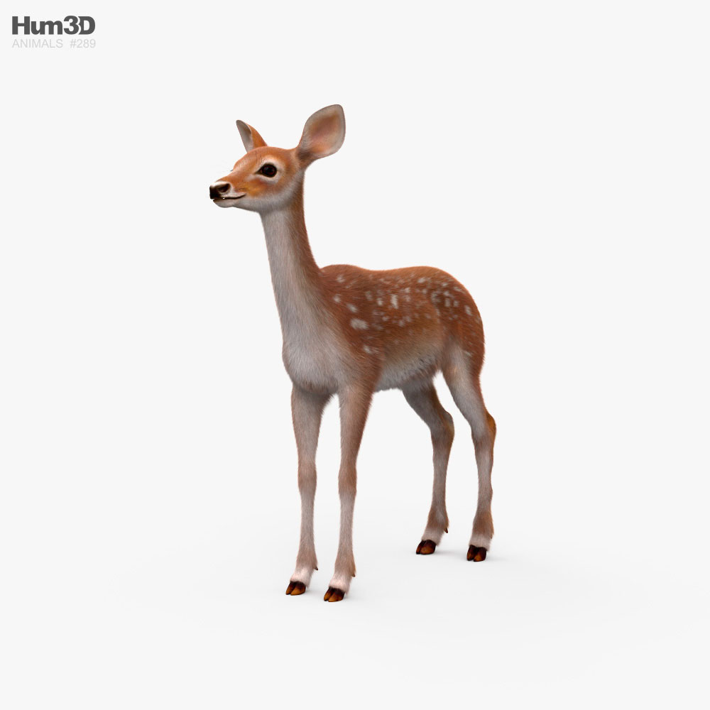 3D model of Deer Fawn HD