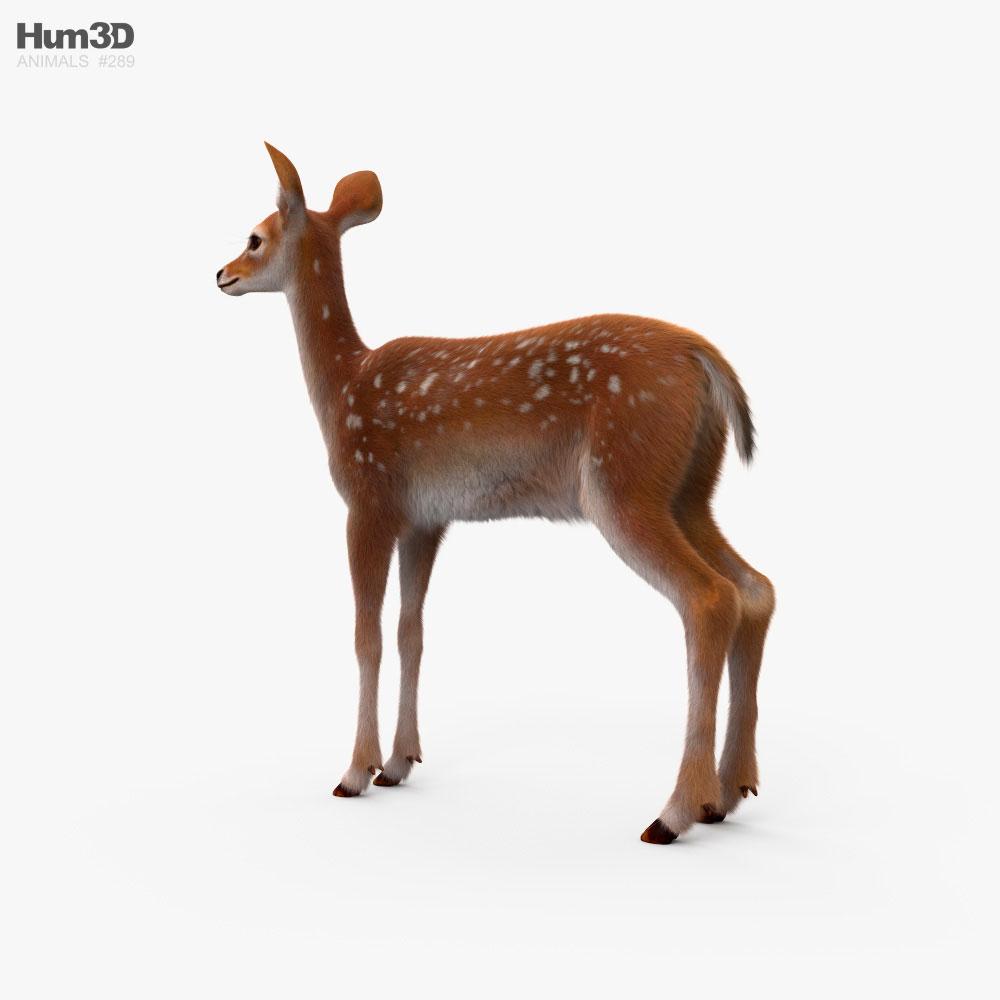 Deer Fawn HD 3d model