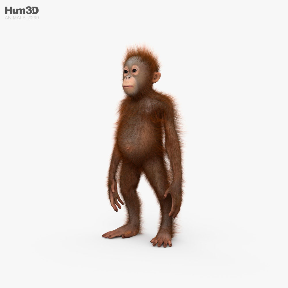 Orangutan Baby HD 3D model