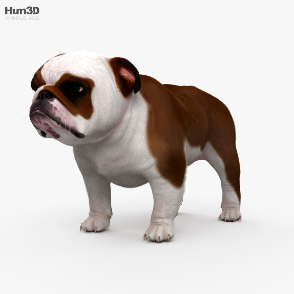 English Bulldog HD 3d model