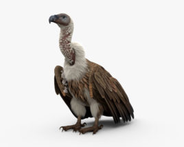 3D model of White-Backed Vulture HD