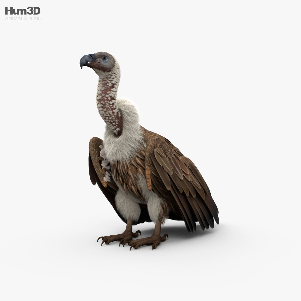White-Backed Vulture HD 3D model
