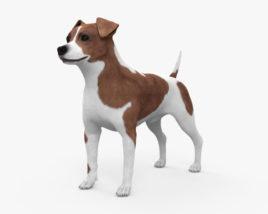 Jack Russell Terrier HD 3D model